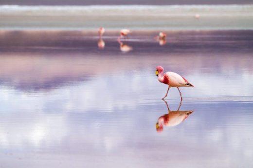 Mrówki i flamingi - odmienne podejścia do pracy