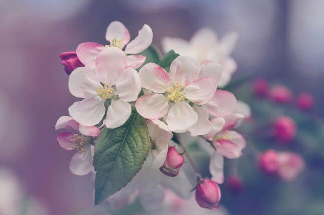 Nie chcę kwiatów